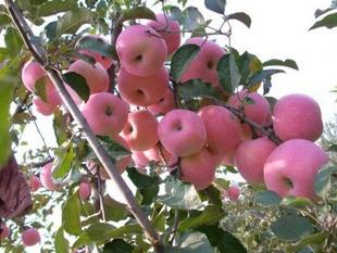 冬天吃什么水果好